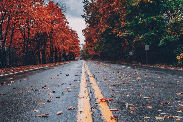 Autumn road leaves